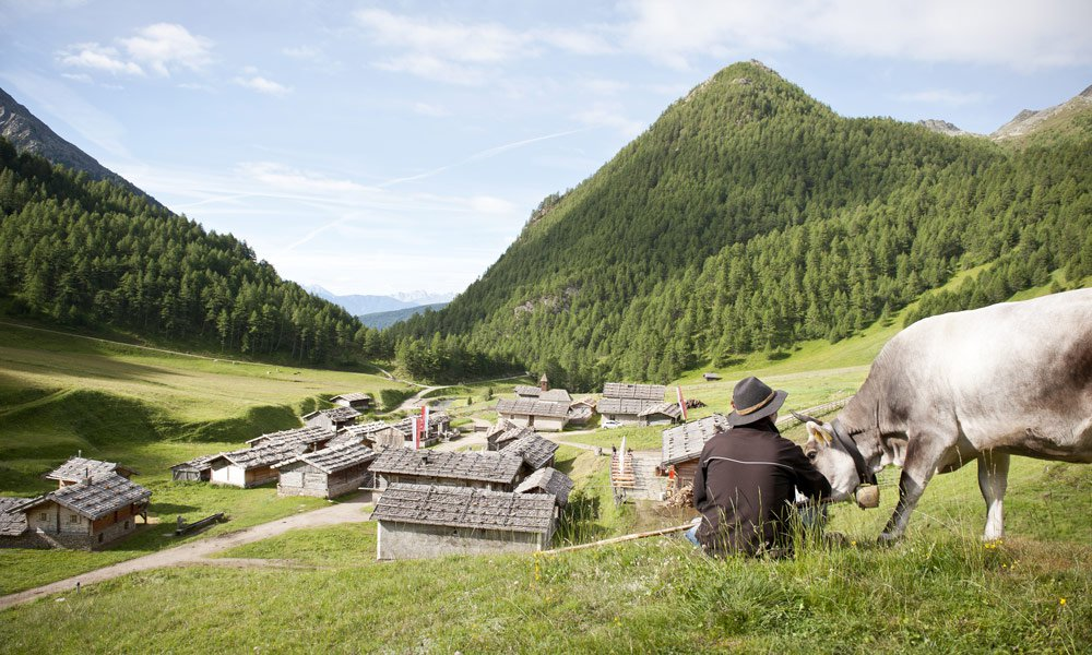 Explore the alpine region on foot: the South Tyrolean Milk Trail, the Fane Alm and the Pfunders' Trail